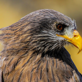 The look by JD Lotz - Animals Birds