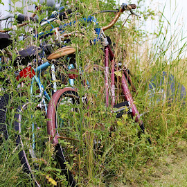 by Kym George - Transportation Bicycles