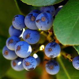 Berry Ripe by Ingrid Anderson-Riley - Nature Up Close Gardens & Produce
