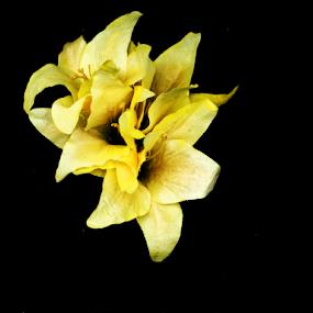 by Edward Gold - Flowers Single Flower