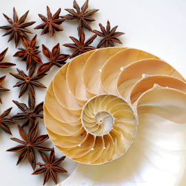 paisley by Adjie Tjokrosoedarmo - Artistic Objects Still Life ( paisley, stars, seashell, sea, nautilus, star anise, beach )
