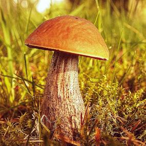 loner by Vláďa Lipina - Nature Up Close Mushrooms & Fungi
