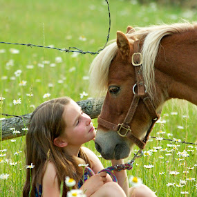 Two sweeties by Giselle Pierce - Babies & Children Children Candids ( little girl, horse, halter, children, kid, miniature horse, child, field, fence, girl, friends, shorts, summer, flowers )