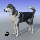 Snow Dog Survival Simulator APK for Blackberry