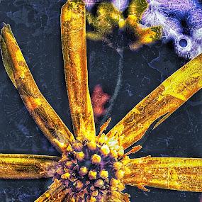 Bolder by Erl de Jose - Digital Art Things ( digital art, artistic, nature close up, digital photography, garden, flower )