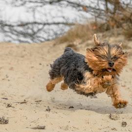 Baby girl running by Natasja Martijn - Animals - Dogs Running ( baby girl )