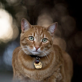 by Wendy Berning - Animals - Cats Portraits