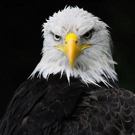 Do I Look Happy? by John Larson - Animals Birds