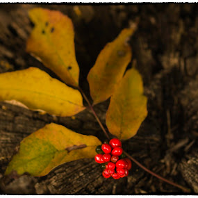 Signs of Autumn by Fran Gallogly - Nature Up Close Leaves & Grasses ( pwcfallleaves )