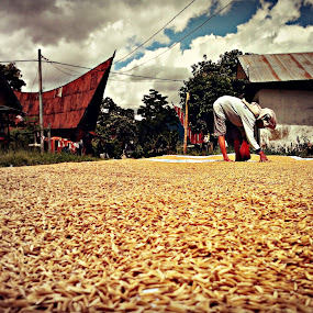 Menjemur Padi by Daniel Pasaribu - People Street & Candids ( paddy )