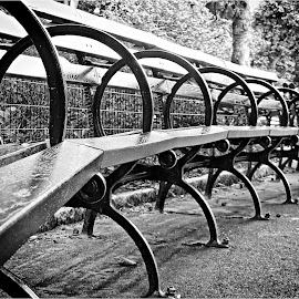 Benches in NYC Central Park by Tricia Scott - City,  Street & Park  City Parks ( bency, park, trees, nyc, landscape, furniture, central park )
