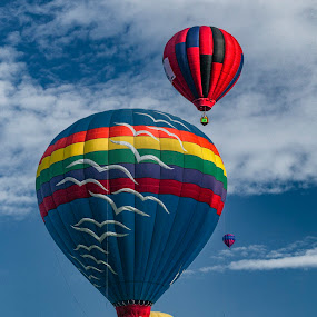 Up, Up and Away by Terry Scussel - Transportation Other ( albuquerque international balloon fiesta, albuquerque, balloons, hot air balloons )