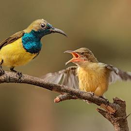 Dad, I'm hungry...... by MazLoy Husada - Animals Birds