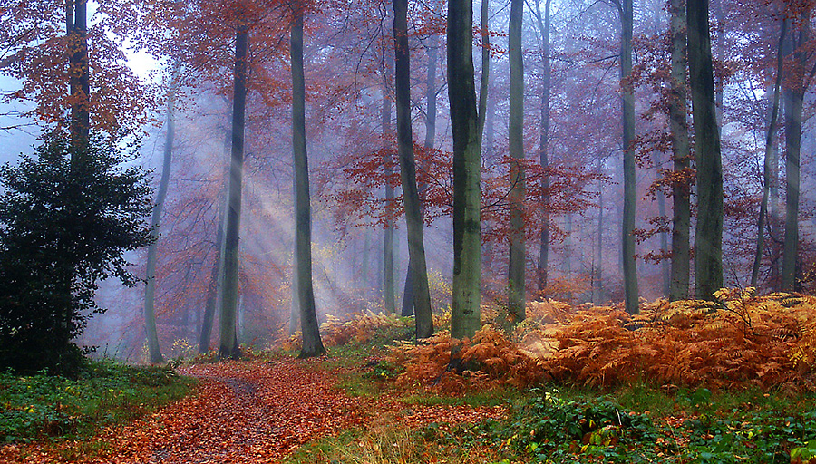 Autumn Woods by Ceri Jones - Landscapes Forests ( autumn, trees, forest )