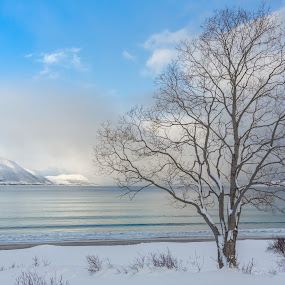 By the seashore by Benny Høynes - Landscapes Waterscapes ( winter, cold, tree, color, sea, landscape )