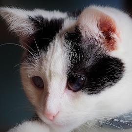 by David Branson - Animals - Cats Portraits