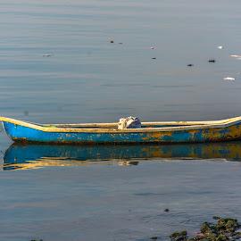 still life.. in water.. as still as it gets by Hariharan Venkatakrishnan - Artistic Objects Still Life