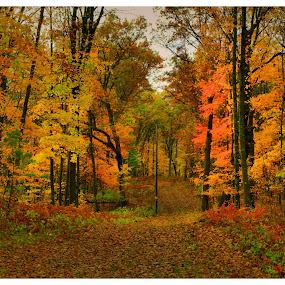 Looking For Something To Photograph by Michael Priest - Landscapes Forests ( wisconsin, autum, fall, forest,  )