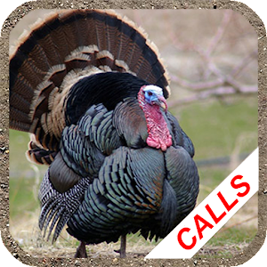 Turkey hunting calls: Hunting sounds Mating calls. For PC / Windows 7/8/10 / Mac – Free Download