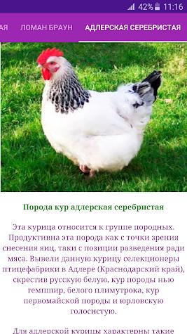 Breeds of chickens - Incubator Screenshot