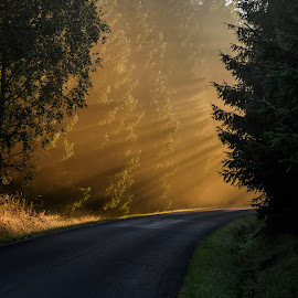 Close Encounters of the Third Kind by Miroslav Ondříšek - Landscapes Sunsets & Sunrises ( on the road, sun beams, mornng, trees, forest, road, sunrise, sunlight, sun )