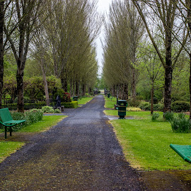 Adare park by Lisa Lantrip - City,  Street & Park  City Parks