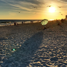 Umbrella, Birds, and Shadow at Sunset by Barry Lehman - Landscapes Beaches ( shadow, sunset, umbrella, alabama, beach, landscape )