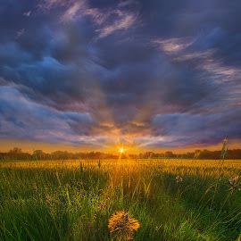 Don't Stop Believin by Phil Koch - Landscapes Prairies, Meadows & Fields ( vertical, farmland, travel, yellow, leaves, sky, nature, tree, weather, perspective, flowers, light, wiscons  in, orange, country   living, twilight, art, journey, horizon, portrait, environment, dawn, season, serene, trees, lines, natural, inspirational, wisconsin, ray, agricu  lture, beauty, landscape, phil koch, spring, sun, photography, farm, country life, horizons, inspired, clouds, office, park, heaven, green, beautiful, scenic, morning, shadows, field, red, blue, sunset, amber, meadow, summer, beam, earth, sunrise, garden )