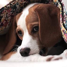 Just Biting My Leg..... by Sandy Considine - Animals - Dogs Portraits