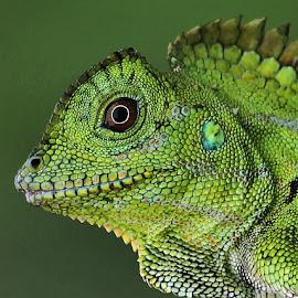 by Saefull Regina - Animals Reptiles