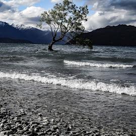 Stormy Lake by Perla Tortosa - Landscapes Weather ( wind, nature, tree, waves, lake )