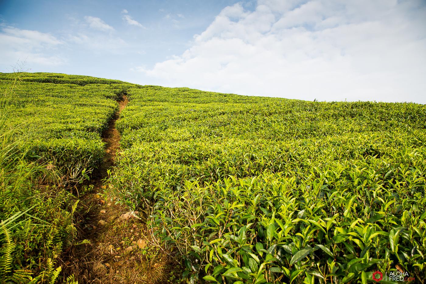 0074 - Sri Lanka - CP1A7386
