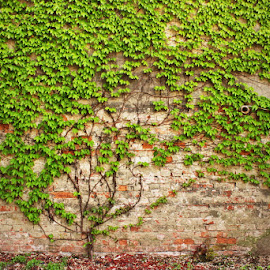 strong roots by Sinisa Predavac - Nature Up Close Trees & Bushes ( tree small green bricks wall detail concept )