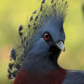 by Hansen Christian - Animals Birds