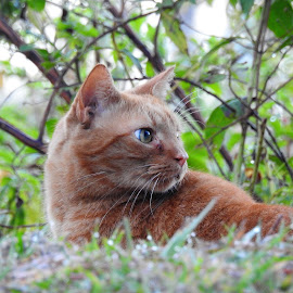 Cat along the marsh by Mary Gallo - Animals - Cats Portraits ( cat, nature, animal,  )