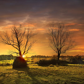 Sunset by Emma Thompson - Landscapes Sunsets & Sunrises ( sunset, trees, landscape )