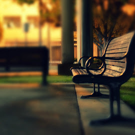 lonely bench by Yana Rybakov - City,  Street & Park  City Parks