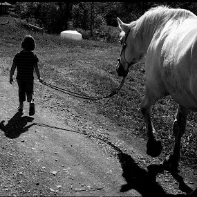 A little girl with a 2200 lbs horse  by Carly Stine - Animals Horses