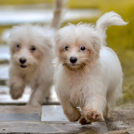 Playing with my pets by Dave Lerio - Animals - Dogs Puppies