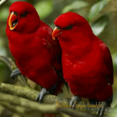 Download 1000+ Birds Wallpapers APK on PC