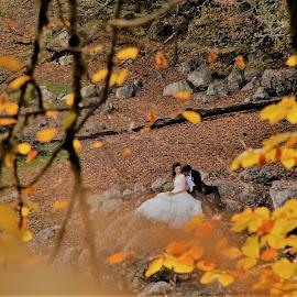 Gelin ve damat by Recep Cenbek - Wedding Other ( damat, gelin, düğün, sonbahar, aşk )
