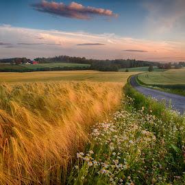 Road through the fields by John Einar Sandvand - Landscapes Prairies, Meadows & Fields ( field, ås, norway )