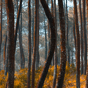 Pine trees by Dadan Suryasaputra - Nature Up Close Trees & Bushes