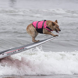 Skylar by Janet Marsh - Animals - Dogs Playing ( skylar, dogsurf, dog )