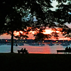 Sunset Through the Trees by Kristine Nicholas - Novices Only Landscapes ( water, reflection, harbor, park, bench, lake, landscape, people, nightscape, benches, nature, tree, night photography, night, river,  )