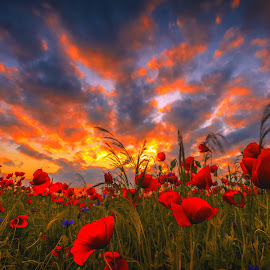 The Burning World by Ruslan Bolgov - Landscapes Sunsets & Sunrises ( clouds, red, colors, sunset, poppies, lithuania, filed )