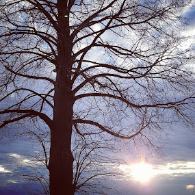 Tree to the Sky by Suzette Christianson - Nature Up Close Trees & Bushes