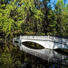 Magnoliia Gardens by Roy Walter - Buildings & Architecture Bridges & Suspended Structures ( charleston, bridge, magnolia gardens, swamp, south carolina )