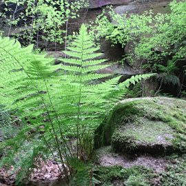 Ferns and Rocks by Virginia Howerton - Nature Up Close Rock & Stone