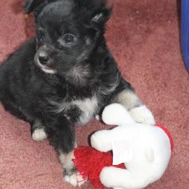 by Snow Losh - Animals - Dogs Puppies